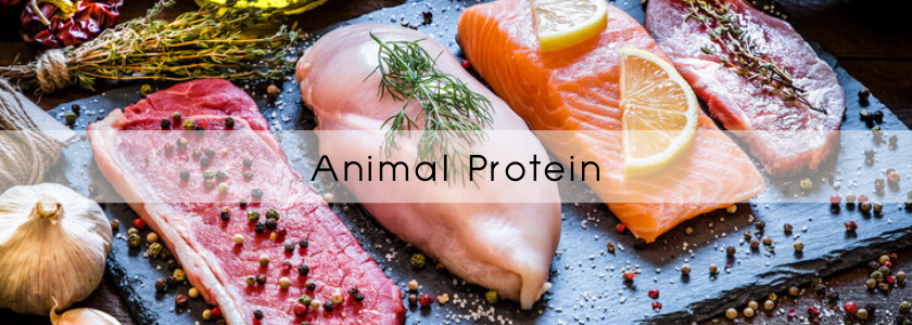 Animal Protein