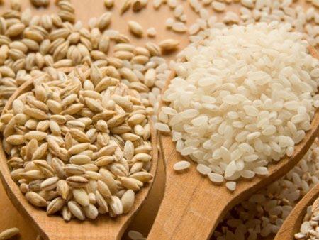 ข้าวบาร์เลย์ (barley)